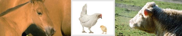 תוספי מזון לבעלי חיים